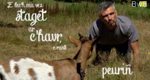 Une web-série pour découvrir les proverbes bretons